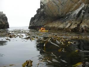 Kayaking around Pt. Lobos